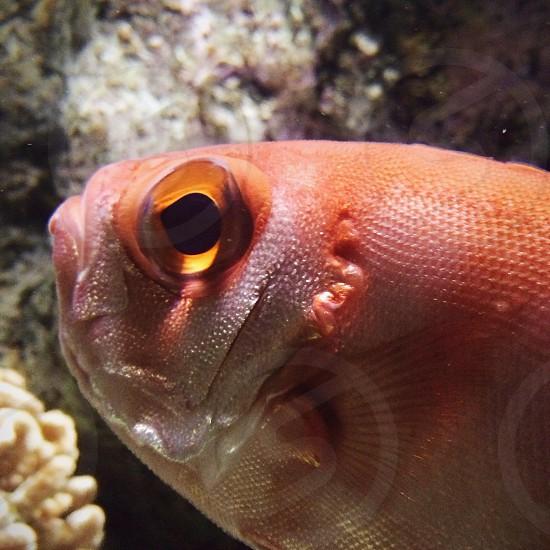 Fish aquarium photo