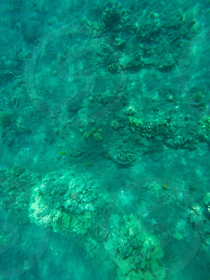 Just snorkeling on a small beach on the Big Island of Hawaii.  photo