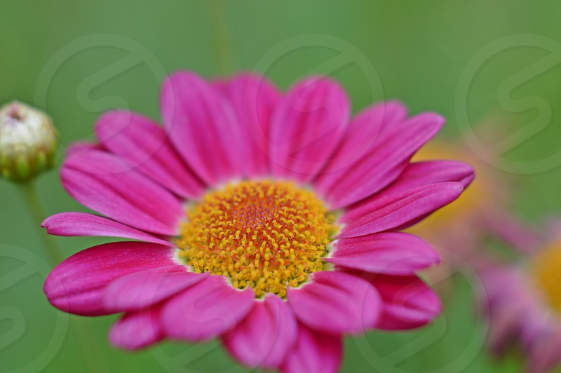 closeup flower photo