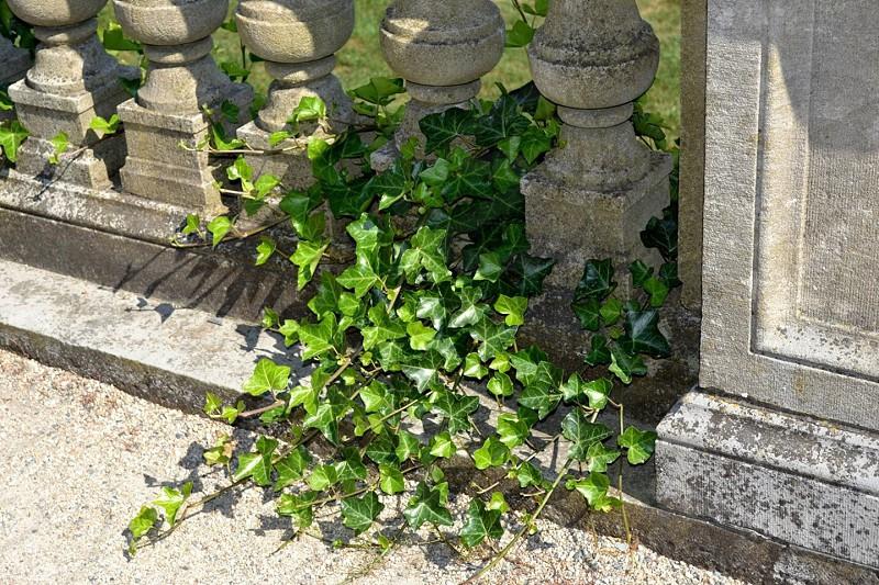 green leaf plant beside concrete railing photo