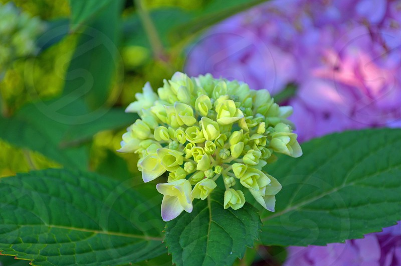 pretty floral botanical pretty mother nature flower micro photo