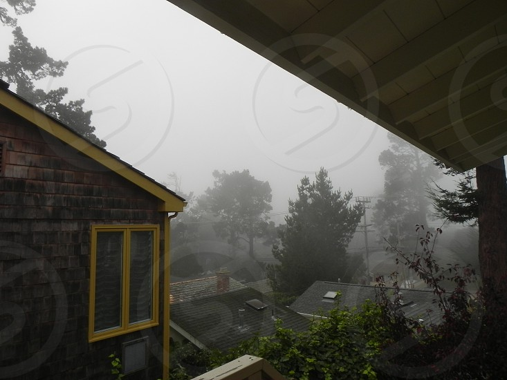 houses and trees with mist weather photo
