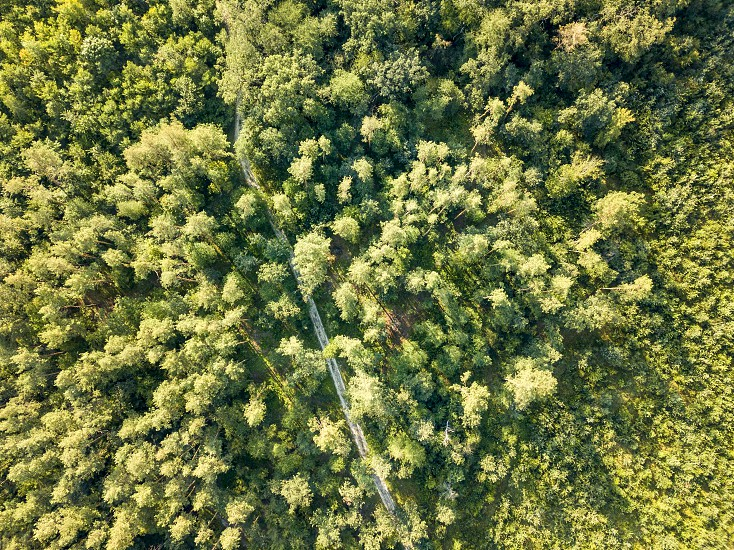 Aerial view from the drone of a dirt road passing through a forest of green trees. Ecosystem conservation concept. Top view. photo