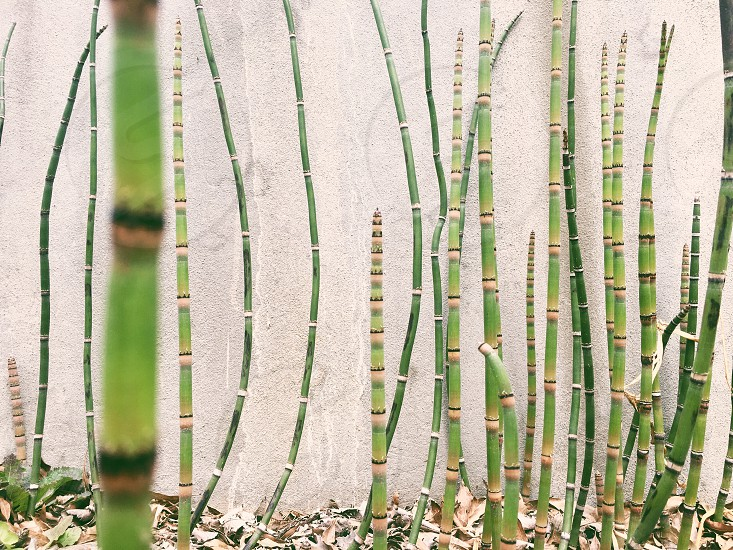 Bamboo nature concrete city pretty green plants stripes photo