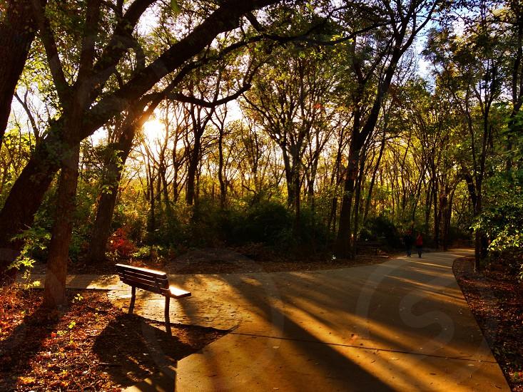 Sunset Path photo