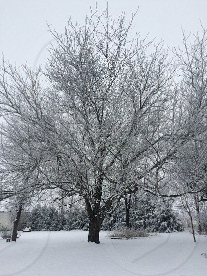 Winter trees outdoors photo
