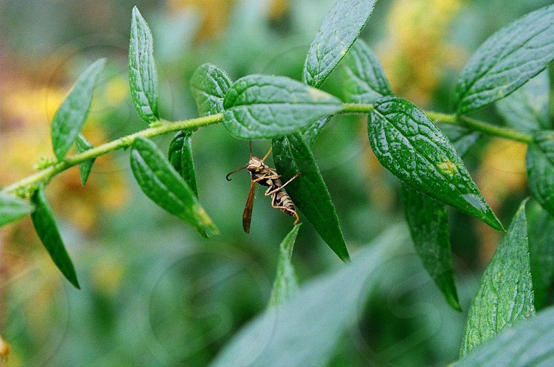 selective focus photography of brown and black wasp on green leaf plant during daytime photo