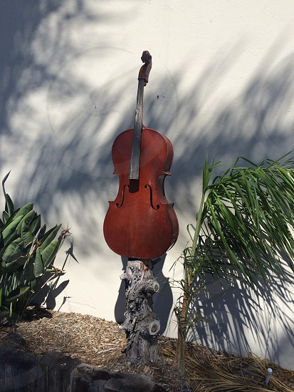 brown wooden cello on top of brown wooden tree trunk photo