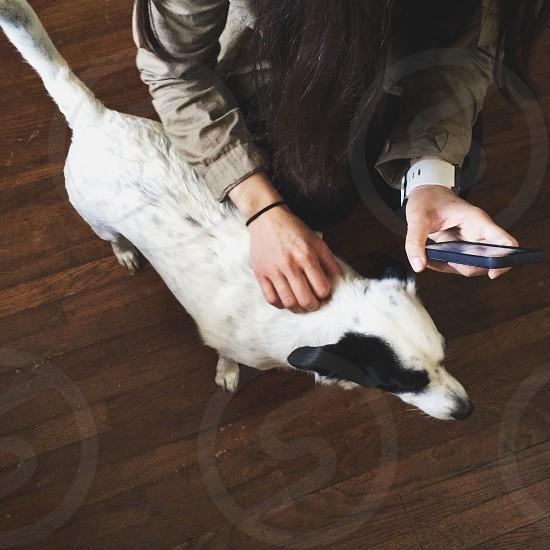 black and white short hair  medium dog photo