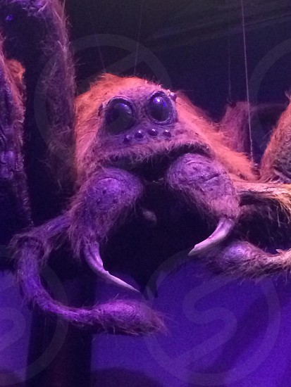 Harry Potter Spider photo