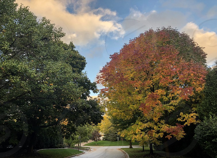 Fall autumn Midwest; Illinois October; suburbs; trees; leaves; Chicago; changing colors  photo