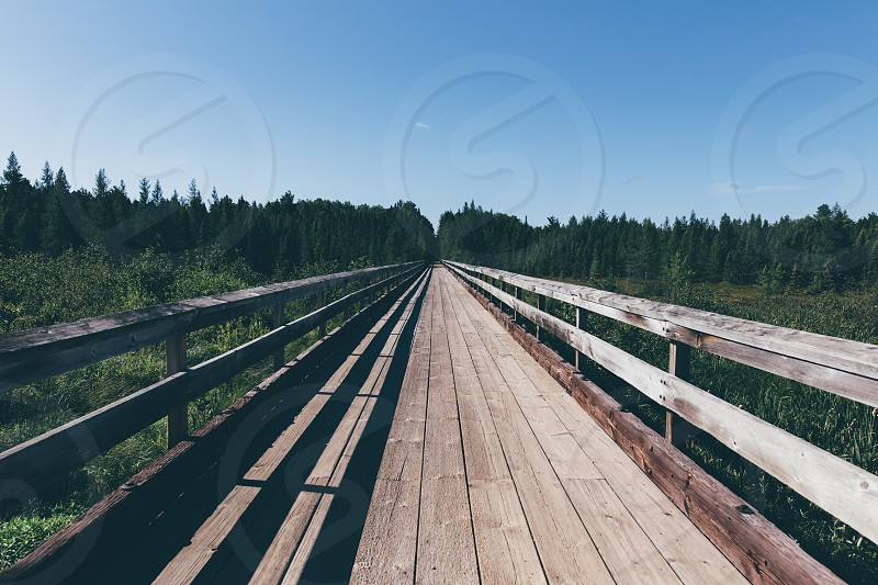 brown and grey wooden bridge between green leaf tree under blue clouds during daytime photo