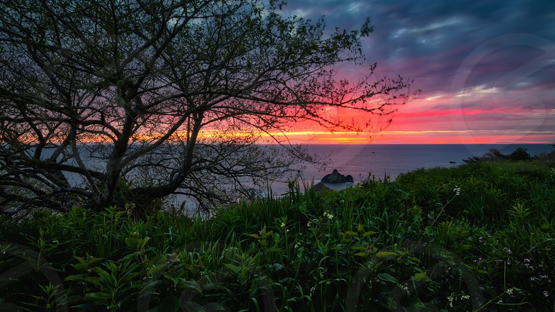 Landscape color image of a beautiful Pacific Northewest sunset with wildflowers and a tree in the foreground. photo