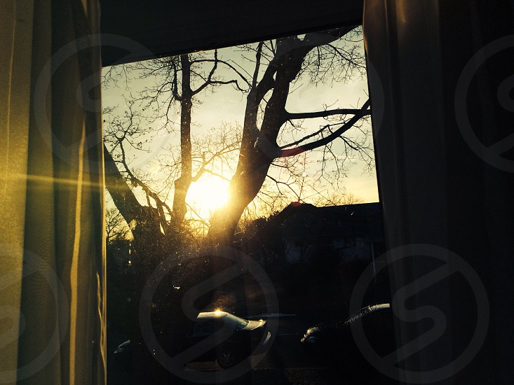 Light through a tree 2 photo