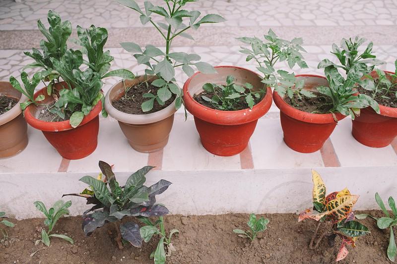Delhi India  photo