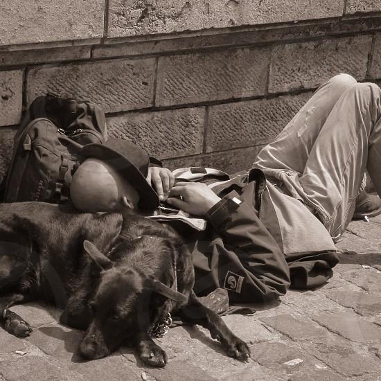 man lying on black short coat large dog photo