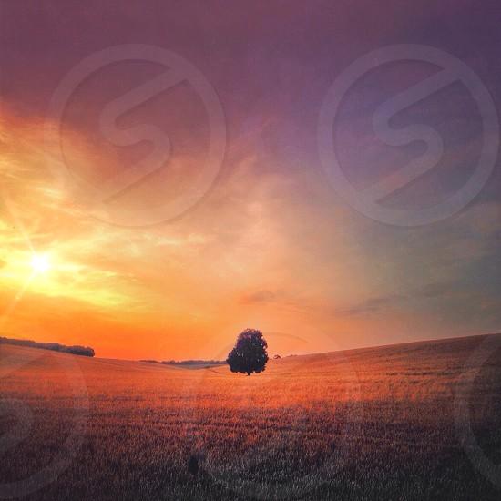 Lone tree. Isolated empty field dream dreamy dreamscape landscape horizon nature countryside desolate warm twilight orange pink.  photo