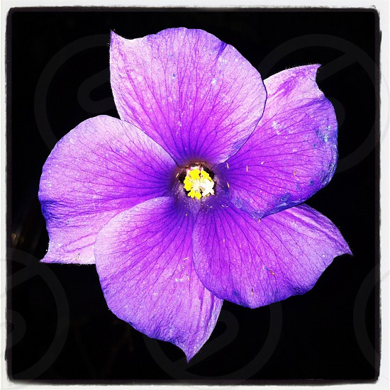 purple and yellow flower photo
