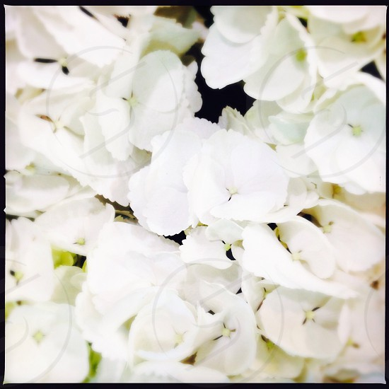 White flowers close up photo