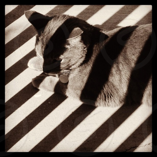 Cat with striped shadows. photo
