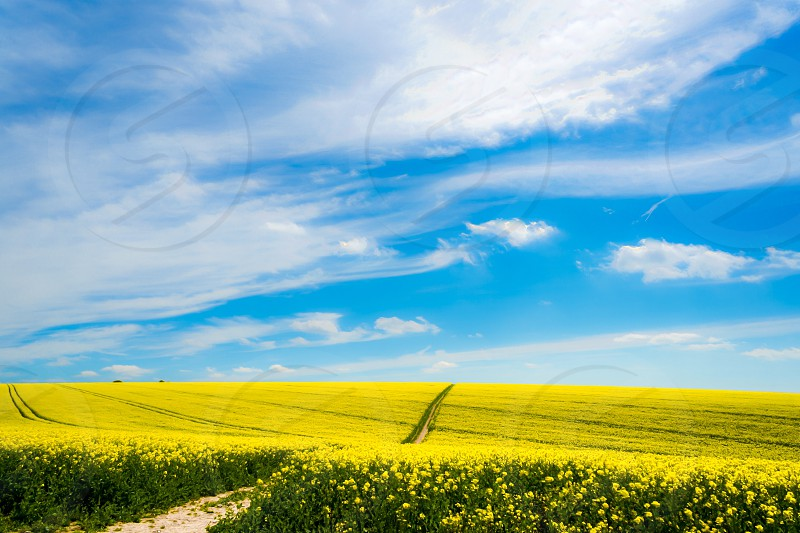 Spring field Sky blue yellow colours southdowns crops farming sunny clouds photo
