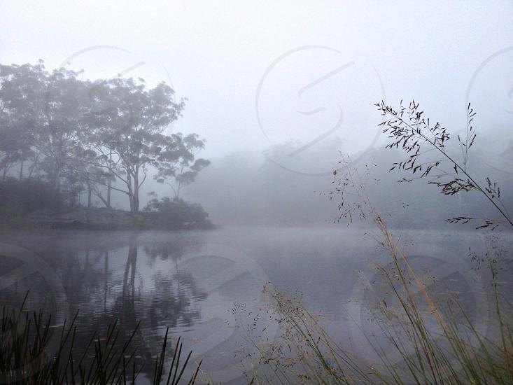 Foggy lake fog trees water lake morning cold misty reflection  photo
