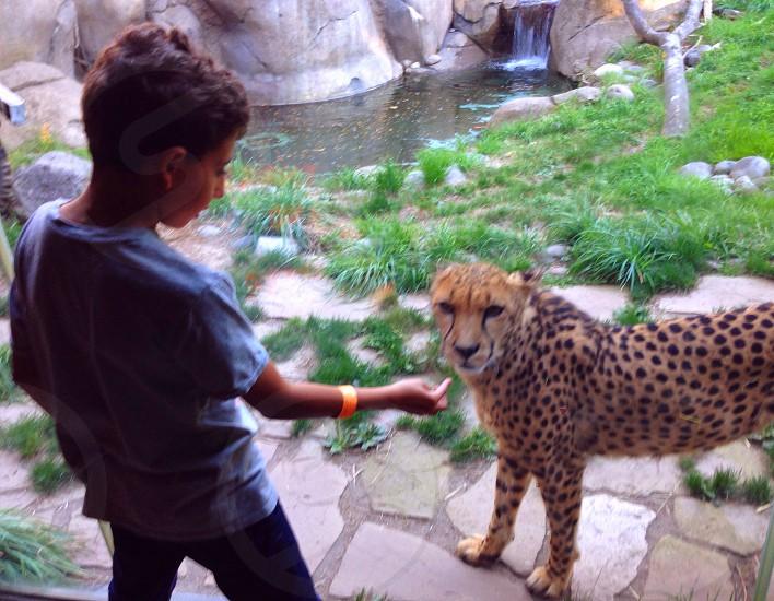 Kid with cheetah  photo