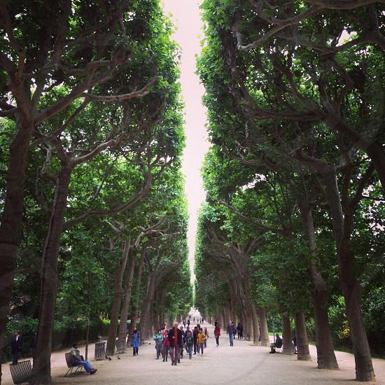 group of people walking in between trees  photo