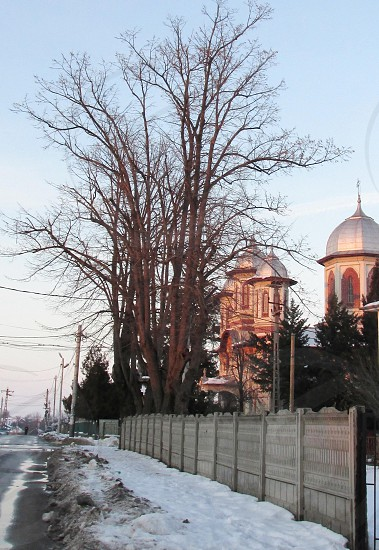 dry trees near a large silver and beige domed building photo