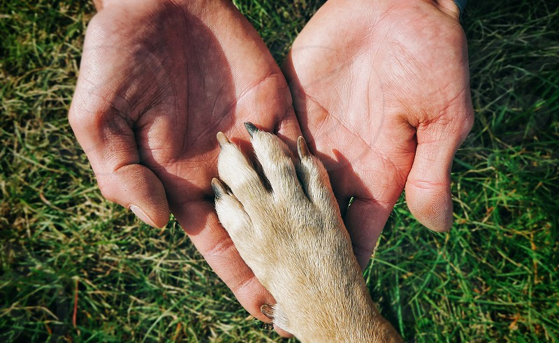 dog owner heart paw love pure happiness palm men furbaby photo