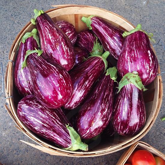 purple egg plant photo