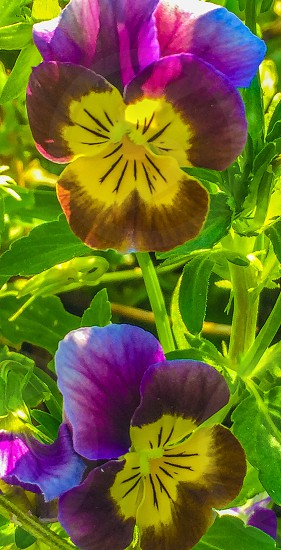 yellow brown and purple flower photo