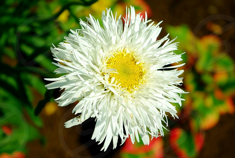 Flower Macro photo