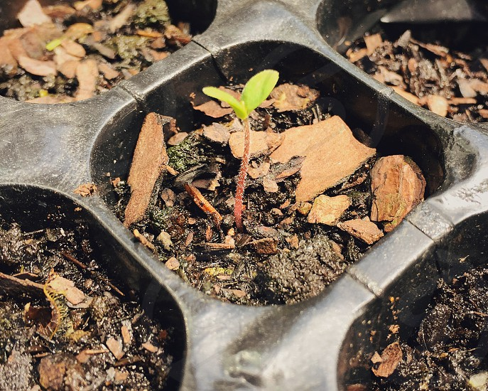 Sprout in seedling container photo