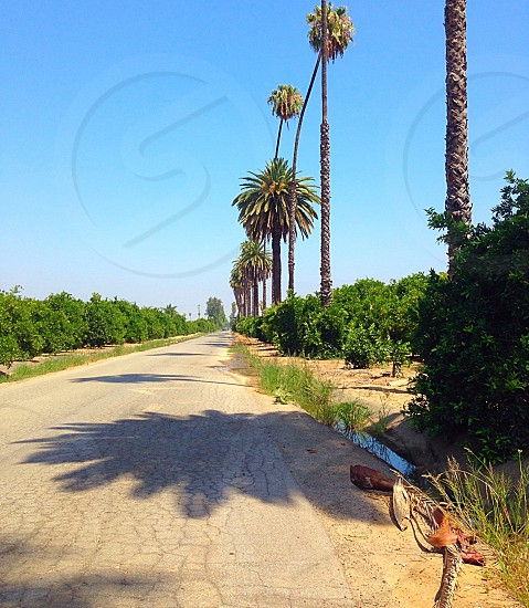 Palm trees and orchards photo