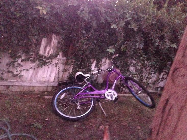 purple and white bike photo