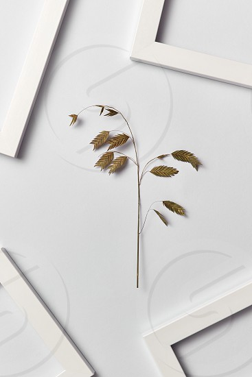 Vegetative composition with empty frames for your text and organic leaf inflorescence on a light gray background. Top view. Greeting card. photo