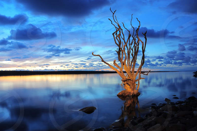bare gray deciduous tree by large body of water photo