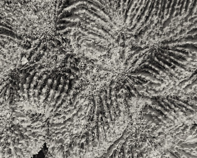 Texture of a coral skeleton photo