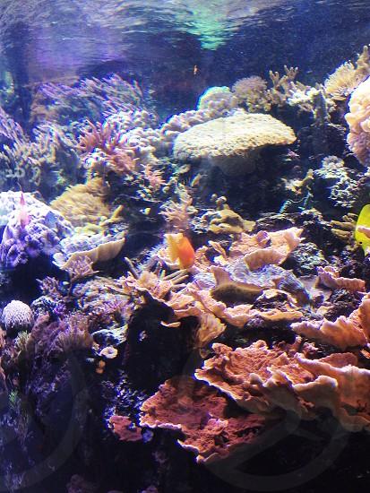 Sealife photo