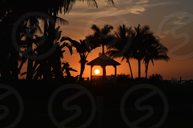 Gazebo outdoors sunset silhouette palm tree trees dusk photo