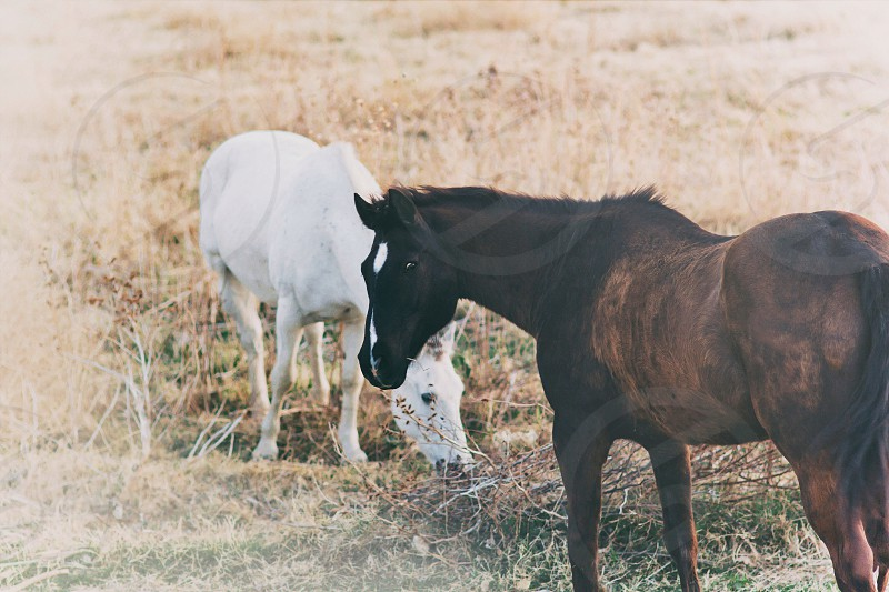 Horse animal nature outdoor  photo
