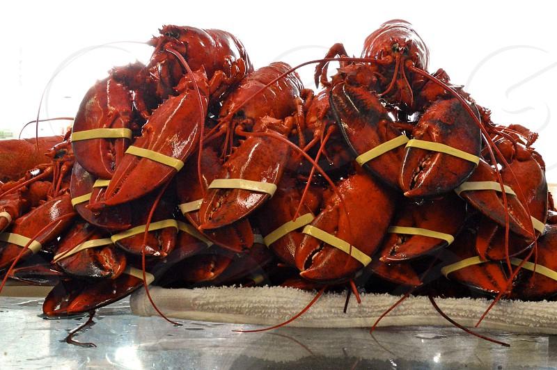 Freshly steamed lobster photo