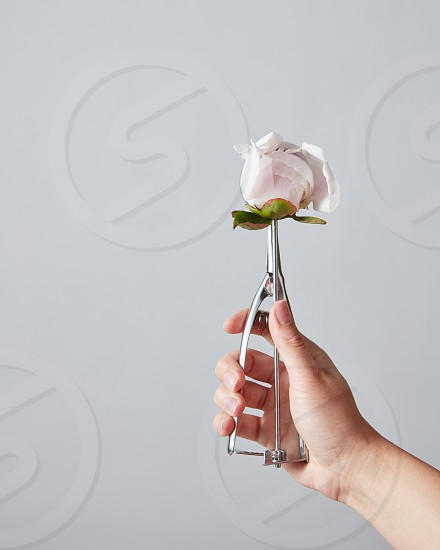 Female hand hold a spoon for ice cream with beautiful white peony bud on a gray copy space. Summer food concept. photo