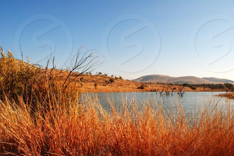 gray grass on a lake photo