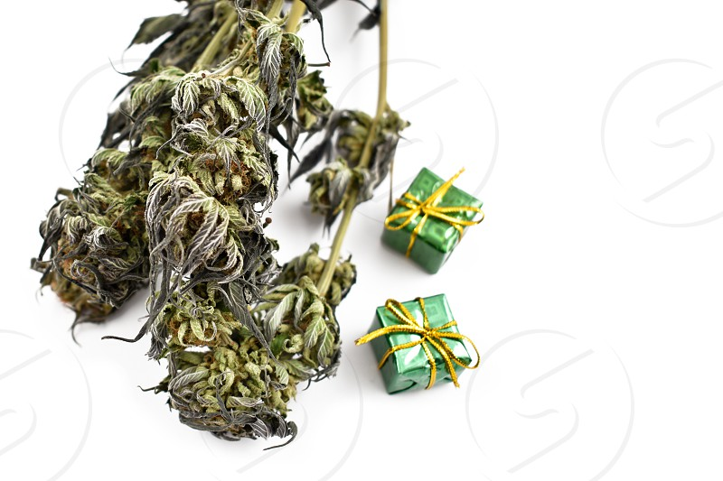 Dried cannabis. Christmas Cannabis. Marijuana isolated on a white background. Merry Cannabis Christmas. Hemp Christmas decorations photo