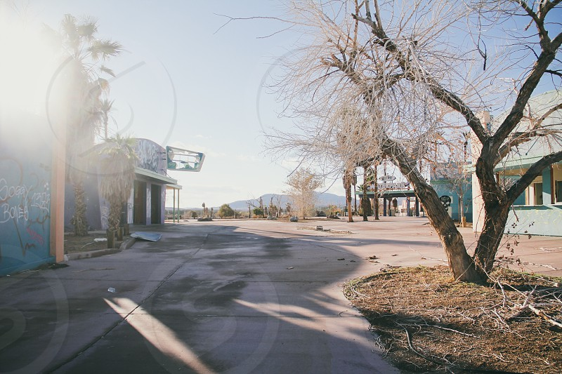dried trees photo