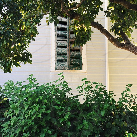 Uptown New Orleans Home - Green photo