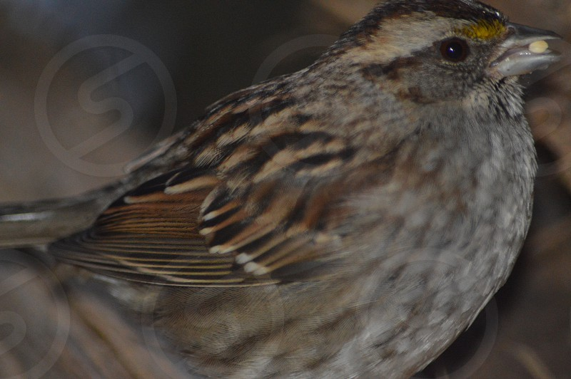 black and brown sparrow in close up photography during daytime photo