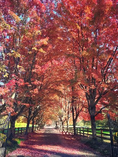 Fall colors. photo
